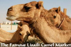 The-Famous-Lisaili-Camel-Market